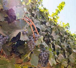 [:es]Passion Vin : conferencia en francés de los enólogos Laurence Real y Arnaud Héreu[:fr]Passion Vin : conférence en français des œnologues Laurence Real et Arnaud Héreu[:]